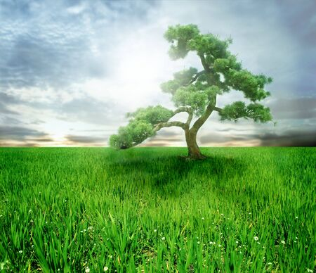 welfare plant:  a tree and a grass field Stock Photo