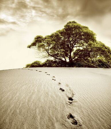 footsteps in the desert and a tree    photo