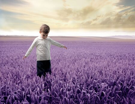 Child standing on a lavender field Stock Photo - 6769707