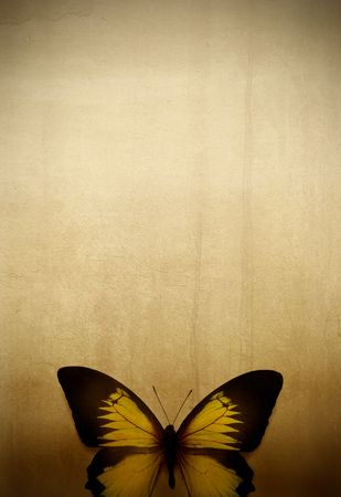 butterfly background: Beautiful butterfly