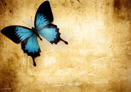 mariposa azul: Hermosa mariposa