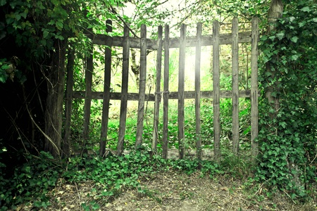 and gate: Wooden gate in a garden