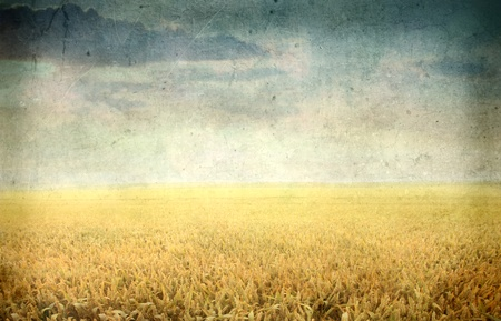 Vintage view of a wheat field