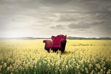 campo de flores: Silla roja en un campo lleno de flores