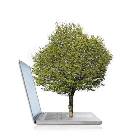 popping out: Green tree popping out of a laptop