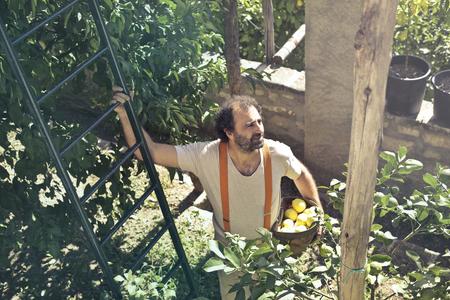 Man collecting some lemons form a plant Reklamní fotografie - 94531376