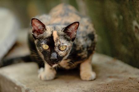 eye: Cat eyes.