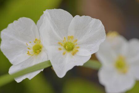 white: Close up white flower .