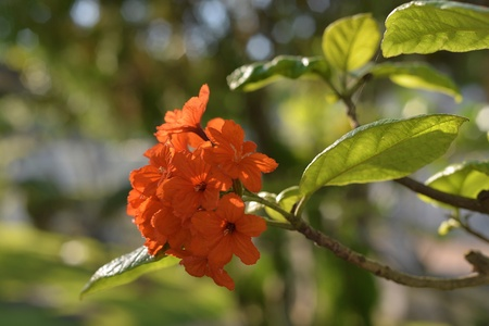 sunny day: Orange flowers in sunny day . Foto de archivo