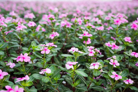 reproducing: Flower garden Stock Photo