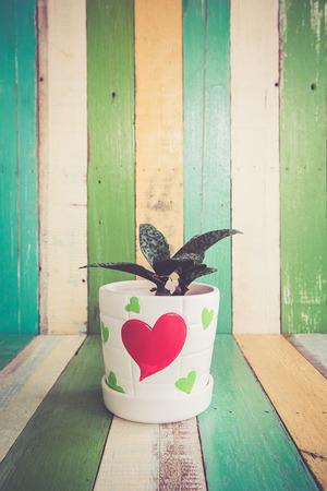screened: cactus flowers in heart vase on retro vintage background design