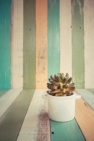screened: cactus flowers in vase on retro vintage background design