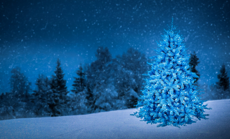 shinning light: christmas tree in beautiful view background idea concept decoration design
