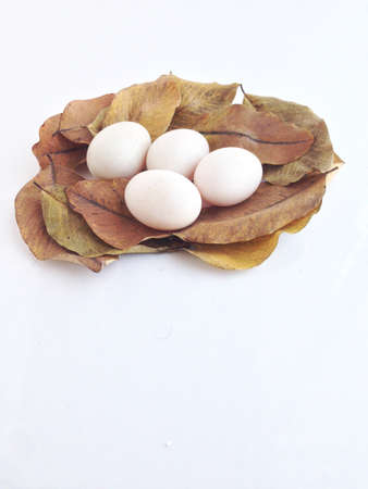 duck eggs on dry leaves 스톡 콘텐츠