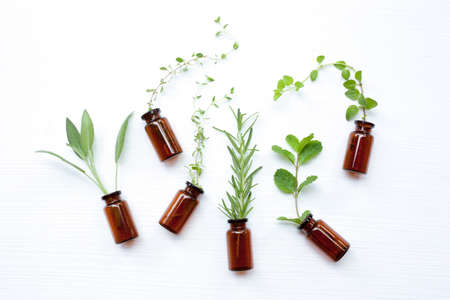 Top view, Bottle of essential oil with herbs  sage, rosemary, oregano, mint, thyme and lemon thyme  on white background. Stock Photo