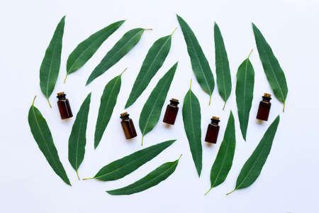 Eucalyptus oil bottle with  leaves on white background. Imagens