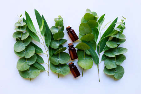 Eucalyptus essential oils with branches of eucalyptus on white background.