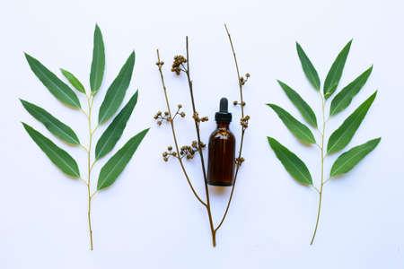 Eucalyptus oil bottle with leaves on white background.