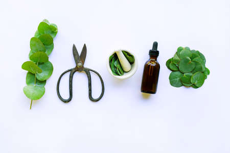 Eucalyptus essential oil with branch, leaves of eucalyptus and vintage scissors on white background