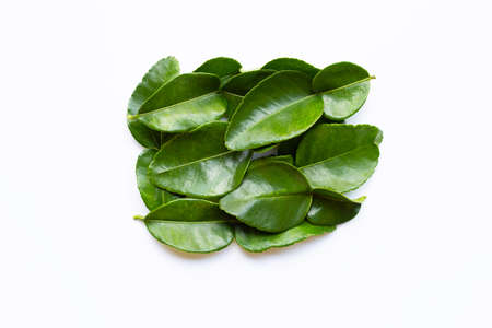 Bergamot kaffir lime leaves herb fresh ingredient isolated on white background.