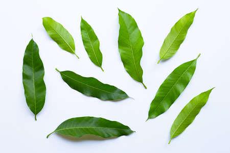 Liście mango na białym tle. Widok z góry
