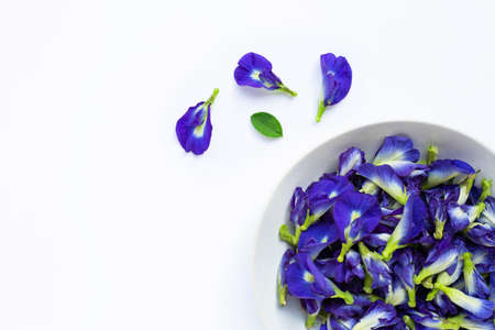 Butterfly pea flower on white background.