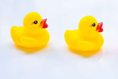 Yellow duck toys on a white background.