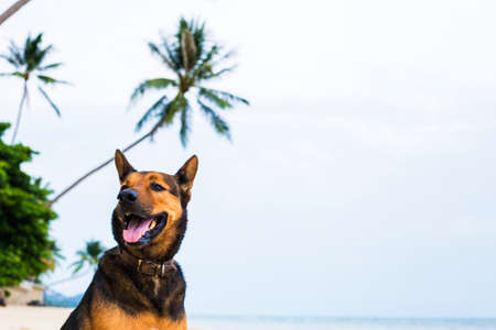A happy dog  playing at the beach. summer concept Banco de Imagens