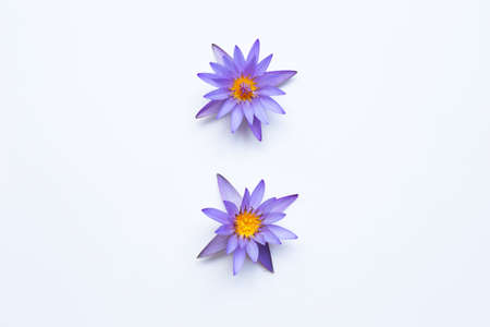 Purple lotus flower blooming on white background. Copy space Banco de Imagens