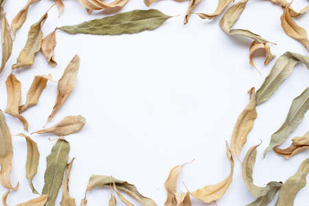 Frame of eucalyptus dry leaves with copy space on white background