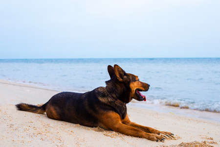 Happy dog relaxing on the beach.  Summer holidays and sea concept.