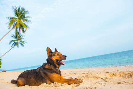 A happy dog relaxing on the beach.  Sea and summer concept