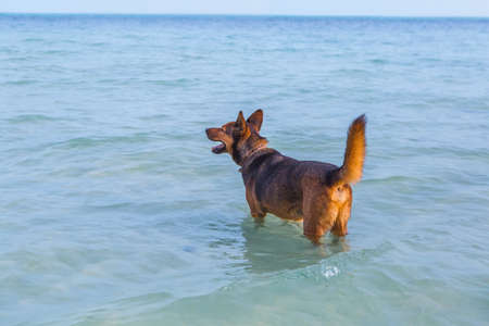 Happy dog in the sea at the beach. Summer concept