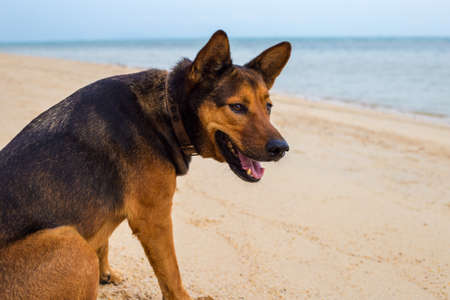 A happy dog relaxing on the beach. summer concept