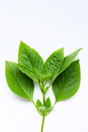 Thai Sweet Basil leaves on white background.