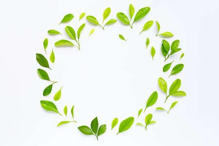 Frame made of green citrus fruit leaves on white background