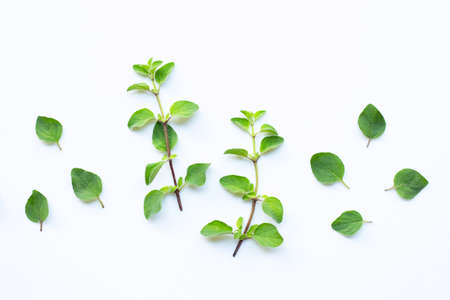 Fresh oregano leaves on white background.