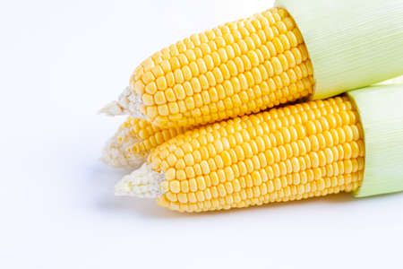 Fresh sweet corn on  white background.