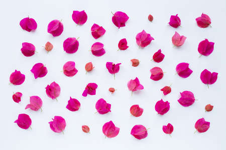 Beautiful red bougainvillea flower on white background. 写真素材