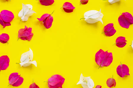 Frame made of beautiful red and white bougainvillea flower on yellow background. Top view