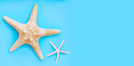 Two starfish on blue background. Top view with copy space Banco de Imagens