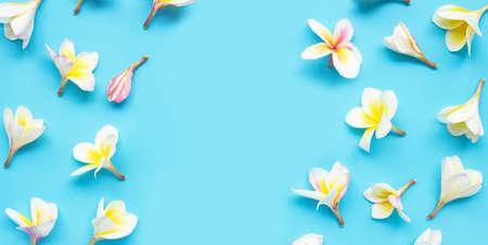 Plumeria or frangipani flower on blue background. Copy space Imagens