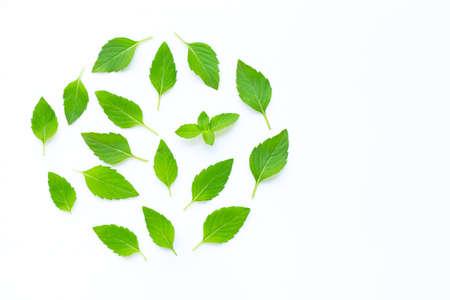 Fresh mint leaves on white background. Copy space Zdjęcie Seryjne