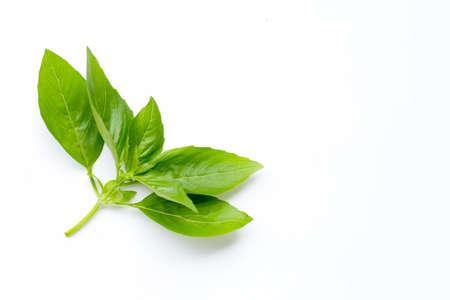 Basil leaves on white background. Copy space Reklamní fotografie