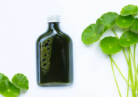 Herbal juice bottle, Fresh green centella asiatica leaves or water pennywort plant or gotu kola. Healthy drinks concept Standard-Bild