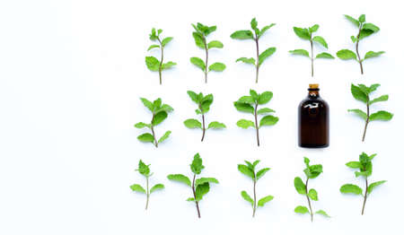 Essential oil with fresh mint leaves on white background. Top view