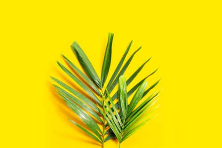 Tropical palm leaves on yellow background.