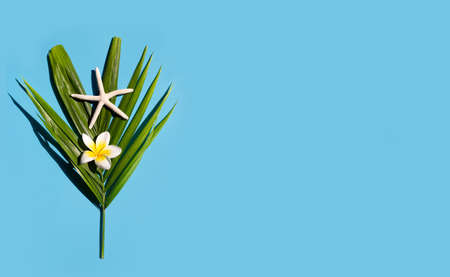 Starfish with plumeria or frangipani flower on tropical palm leaves on blue background. Enjoy summer holiday concept. Copy space Imagens