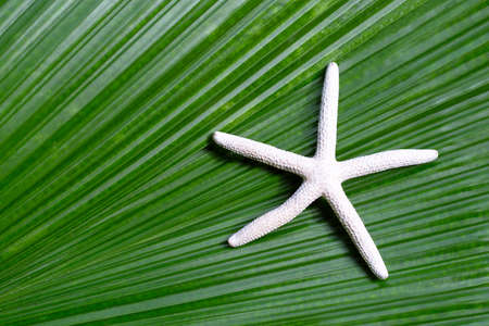 Starfish on tropical palm leaves. Enjoy summer holiday concept. Top view Imagens