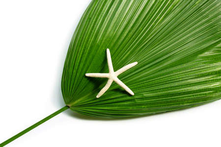 Starfish on fiji fan palm on white background. Enjoy summer holiday concept. Copy space